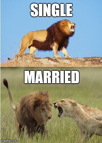 Meme #24 – All the Single Lions   I'm Bringing Celibacy Back